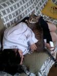 甘えじょうずの猫!!  JK(女子高生)に寄りそう猫のにゃーにゃ