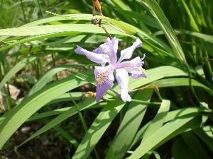 谷川 天神平の花