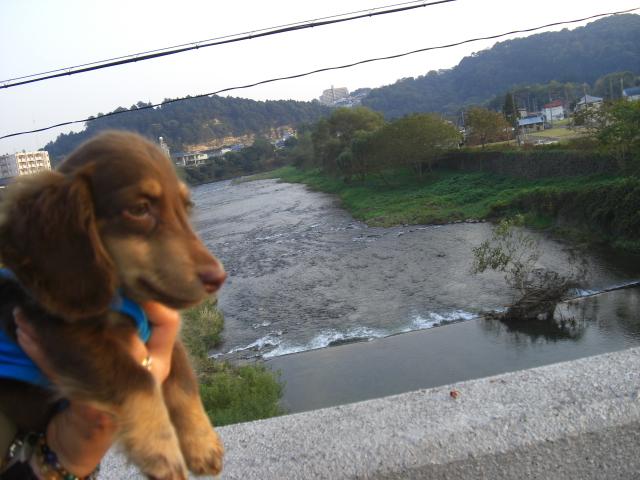 広瀬川 3