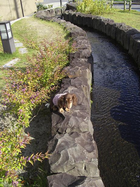 龍君塩釜神社13