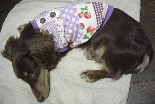 紫パッチ犬服6