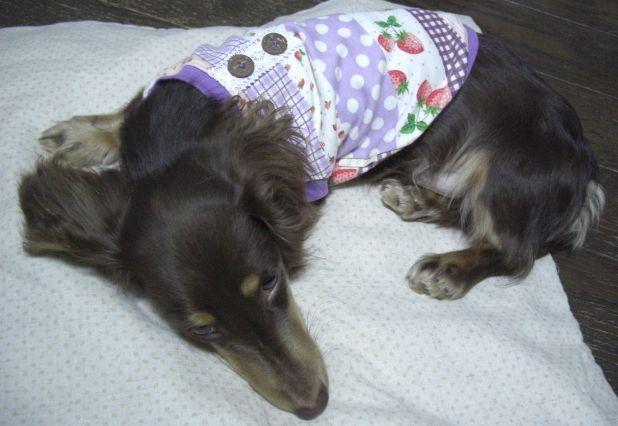 紫パッチ犬服7