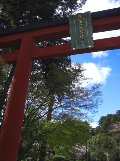 塩釜桜11