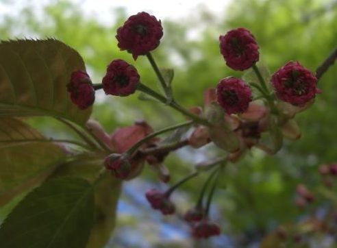 塩釜桜以外3