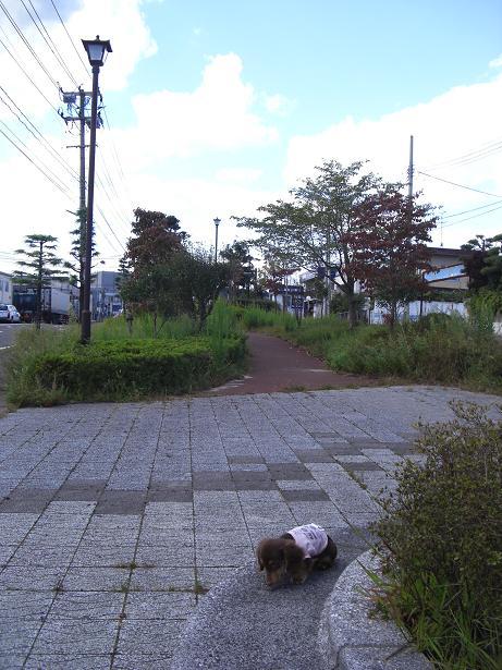 塩虎公園4