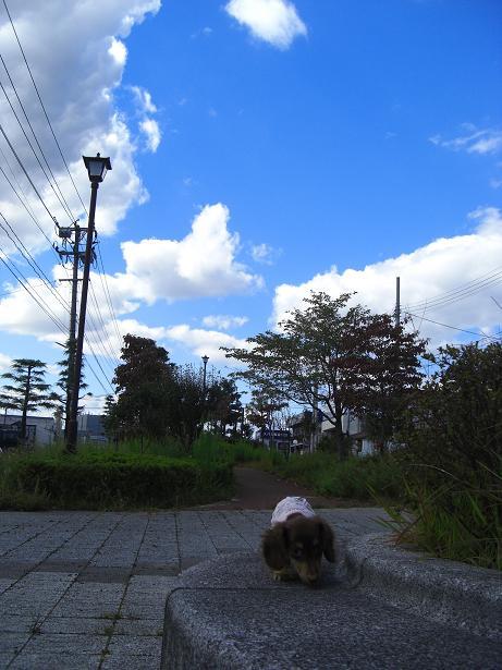 塩虎公園7