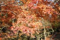 京都2011-北野天満宮3
