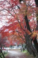 京都2011-大沢池2
