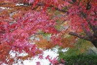 京都2011-大沢池