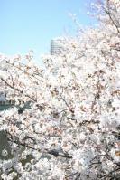 神田川0408-3
