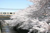 神田川0408-1