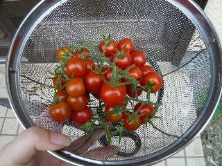 8.3収穫
