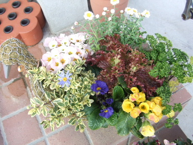 野菜とお花の寄植え