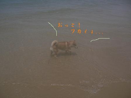 fukaiyo.jpg