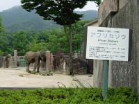 アフリカゾウ①