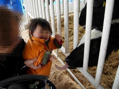 牛さんにペロペロ