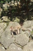 20090228箕面サル