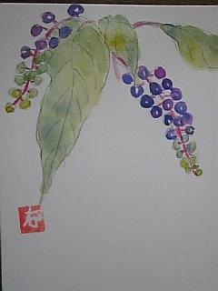 洋種山葡萄