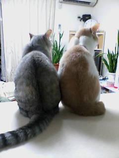 レオン&さくら