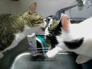 ジャムクリ水を飲む
