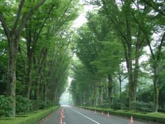 御陵への道