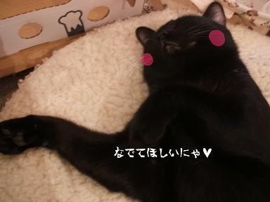 ネロ (13)s