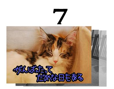 7s.jpg