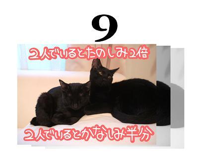 9s.jpg