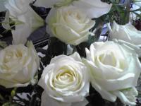 アバランシュのバラ