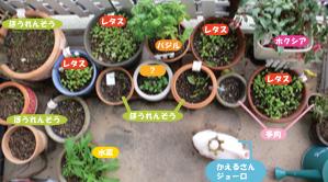 我が家のベランダ菜園(冬バージョン)