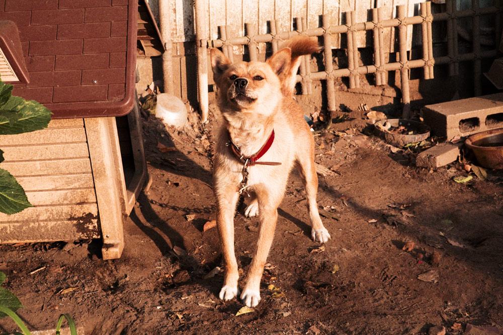 MOBARA08犬