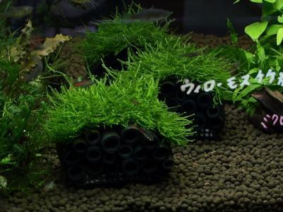 竹炭ウィローモス