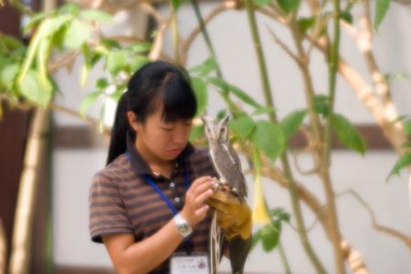 ソフト花鳥園2-4