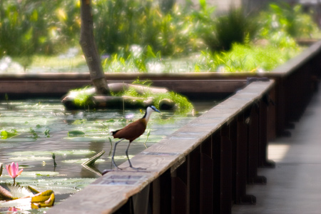花鳥園水辺-4