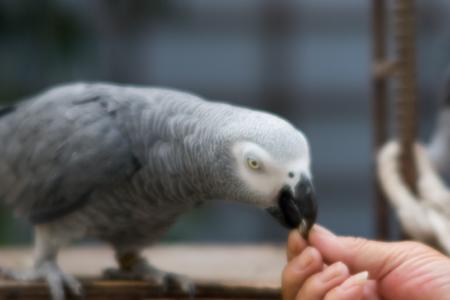 ヒマワリのタネを食べるアンソニー