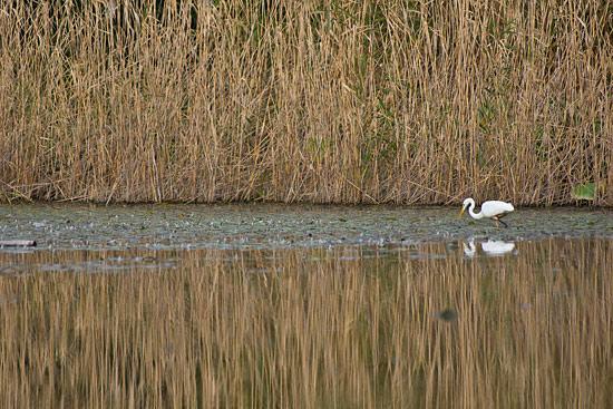 牧野が池-2