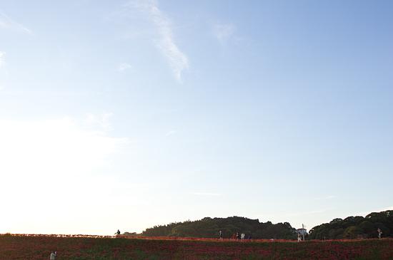 矢勝川土手-7