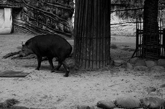 動物園風景-8