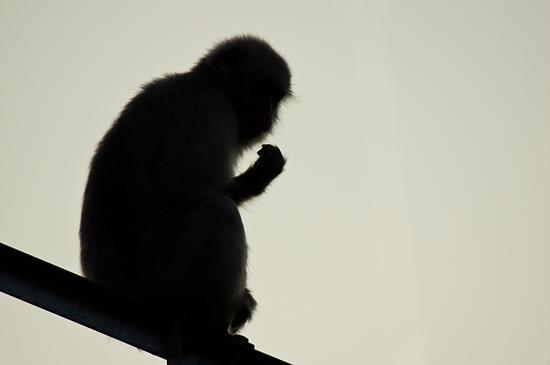 東山動物園-7