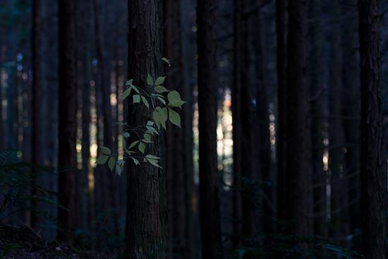 海上の森-10