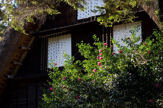 東山植物園2-1