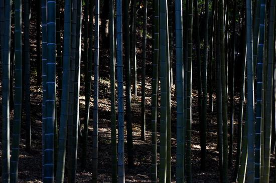 東山植物園2-5