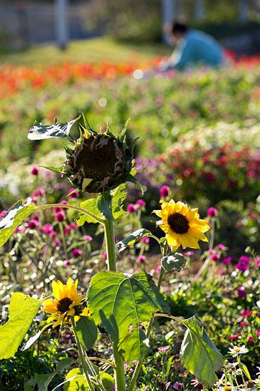 東山植物園2-9