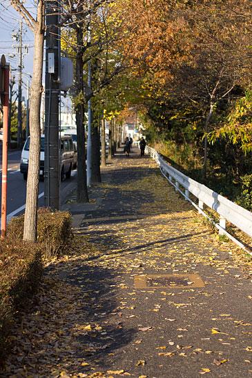 小幡緑地-2
