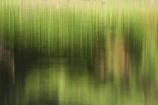 小幡緑地-3