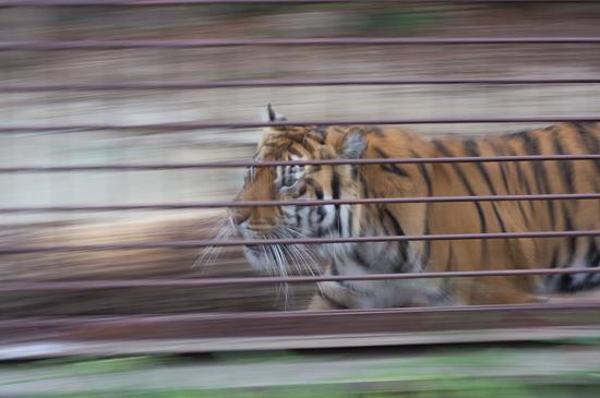 動物園-4