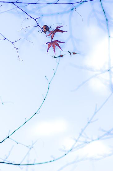 植物園-10