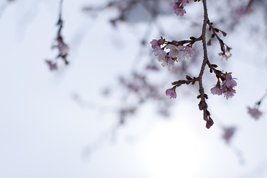 雪の興正寺-14