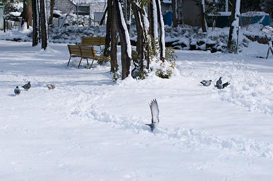 雪の興正寺-4