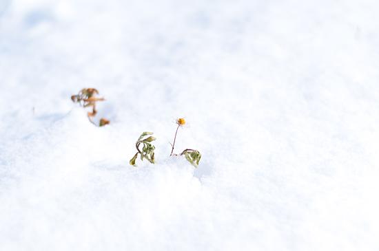 雪の風景-5